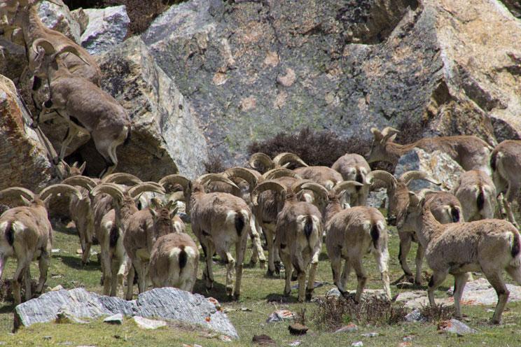 Kanchenjunga Circuit North To South Trek Report May 2016 22