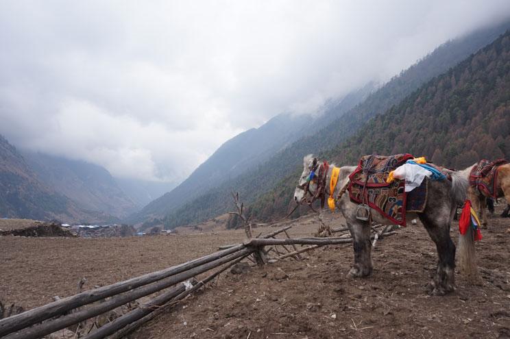 Manaslu Vs Annapurna Circuit 6