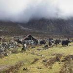Perfect Kanchenjunga Trek 2