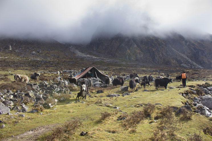 Perfect Kanchenjunga Trek 1
